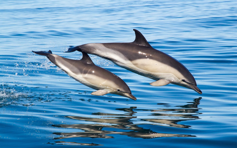 Дельфины в море - Животные - Картинки для рабочего стола ...